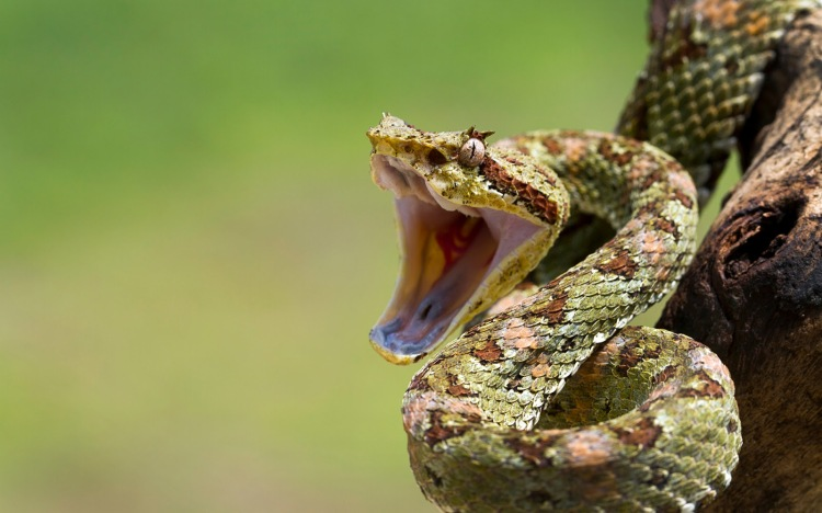 suprised-snake