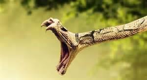 yawning-snake
